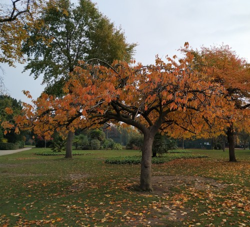 autumn colours in the park