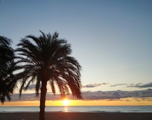Sunrise and palm tree, Alicante