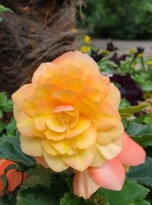 Flower in KH Park